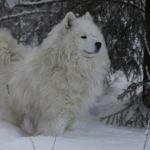 Северная сказка Урала